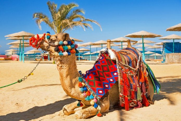 Best Things to do in Hurghada City