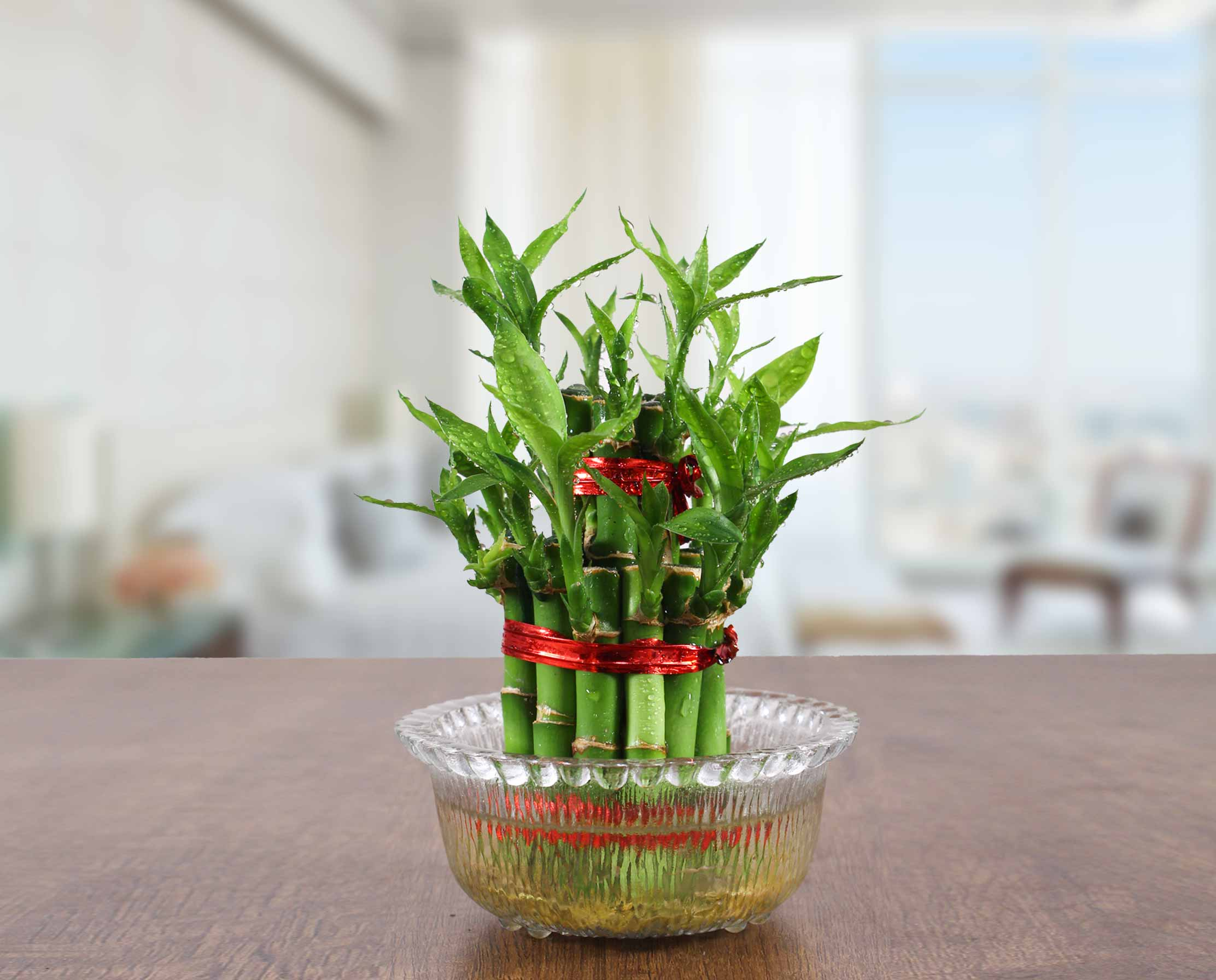 caring for lucky bamboo
