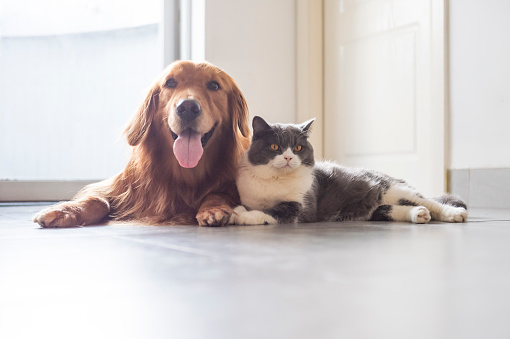 Foods To Share With Dog